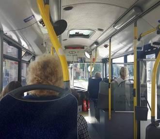 Starogard Gd. Pasażerka autobusu doznała obrażeń ciała. Poszukiwani są świadkowie zdarzenia