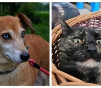 Czy te oczy mogą kłamać? Psy i koty szukają nowego domu