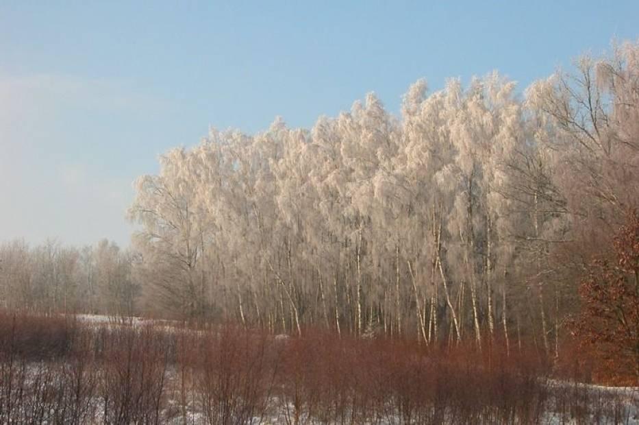 Pierwsze dni zimy - Kaszuby 2012