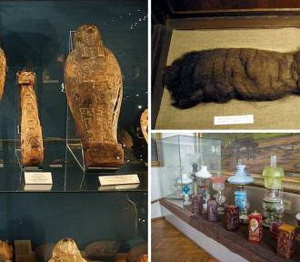 Te eksponaty z małopolskich muzeów są... dziwne. Włosy, wanna i zmumifikowany kot?