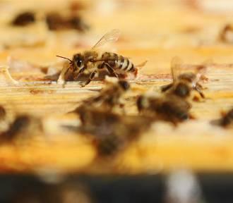 Przy zajezdniach MPK zamieszkają... pszczoły