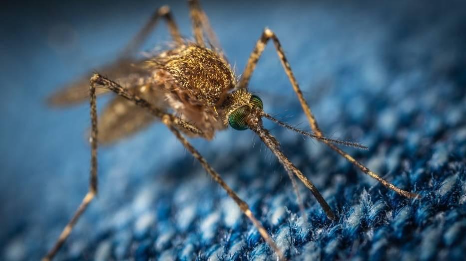Co robić, żeby nie gryzły nas komary? Poznaj sprawdzone sposoby