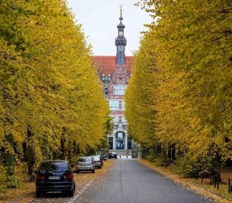 Jesień w Gdańsku wybuchła z całych sił! Złote kolory zagościły w mieście na dobre