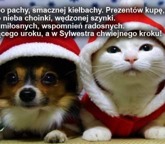 Śmieszne życzenia świąteczne. Wierszyki na Boże Narodzenie 2019 - zabawne, krótkie... do wysłania