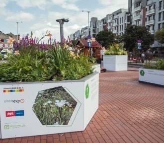 Gdańsk będzie miał Zielony Budżet Obywatelski? Jest projekt uchwały
