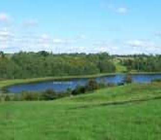 Co w trawie piszczy - czyli ceny ziemi w Polsce