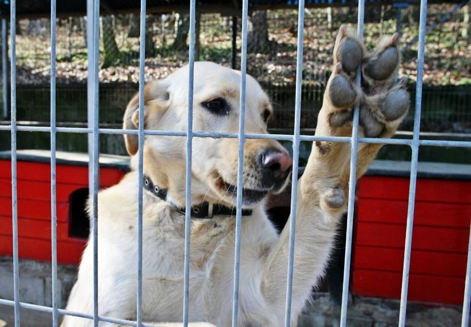 FUndacja Sarigato wzięła urlop od pomagania. Co się stanie z bezdomnymi psami?