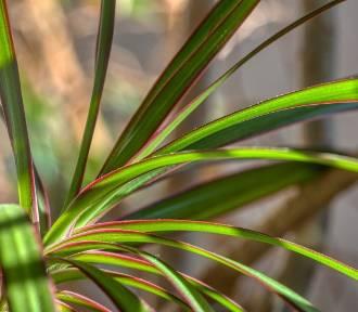 Rośliny antysmogowe - warto je mieć w swoim domu!
