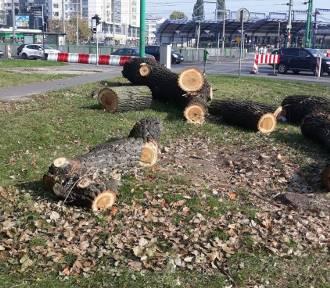 Wokół ronda w Poznaniu wycinane są stuletnie drzewa! [ZDJĘCIA]