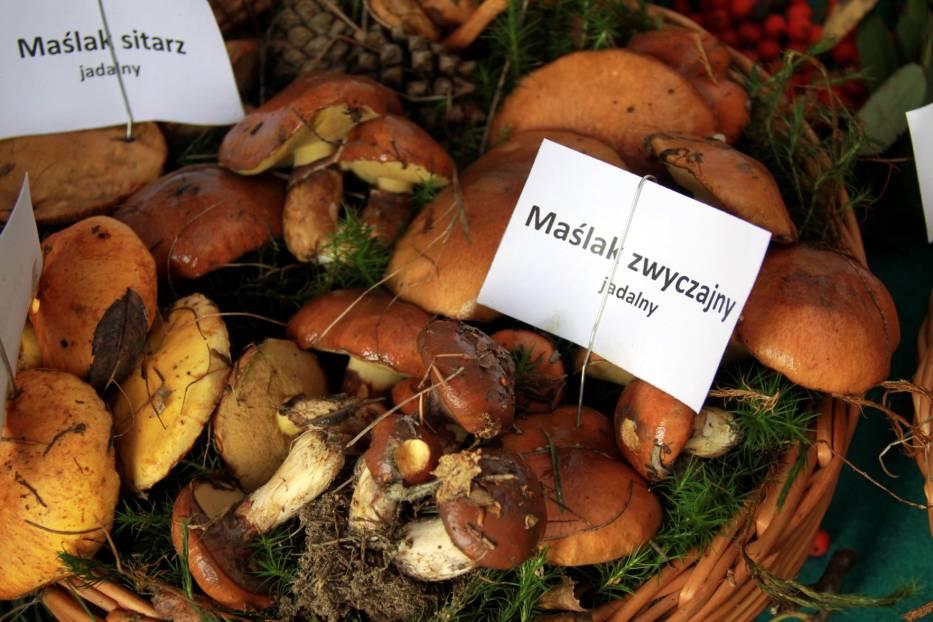 Jak przechowywać suszone grzyby?