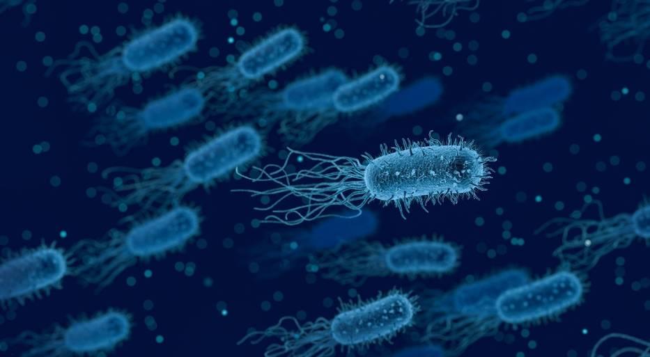 1. Bakterie