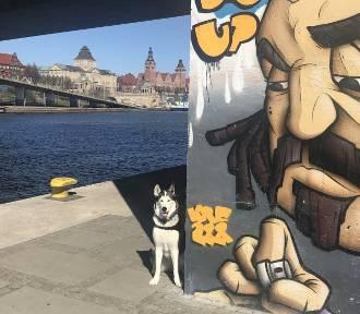 Zniosą podatek od psów. Właściciele się ucieszą. TOZ w Szczecinie mniej...