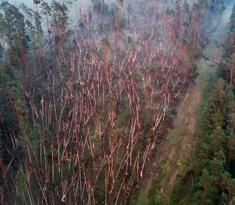 Tak z lotu ptaka wygląda zniszczony przez wichurę las między Tleniem i Osiem