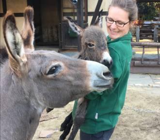 Nowonarodzony osiołek Otto zaprasza do Naszego Zoo