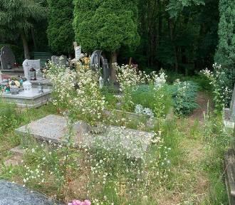 """Bałagan na zielonogórskim cmentarzu? Czytelnik: """"Groby i ścieżki zarastają"""""""