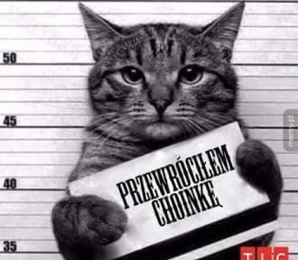 Lubisz koty? Zobacz najlepsze memy o kotach. Śmieszne memy z kotami w roli głównej