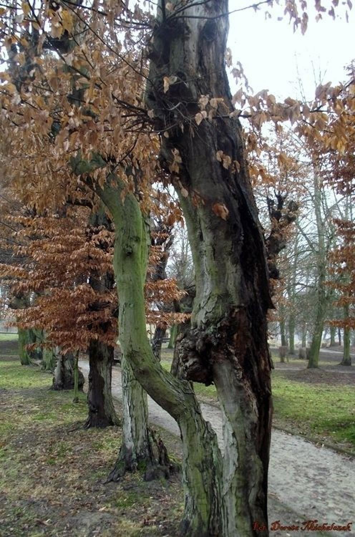 Drzewa i kamienie nauczą cię rzeczy, których nie usłyszysz z ust żadnego nauczyciela (Claraval)