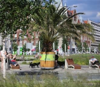Palmy wkrótce wrócą na rynek w Katowicach