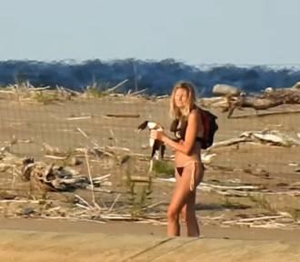 Turyści wtargnęli na teren zamkniętego rezerwatu. Zwierzę znalezione martwe