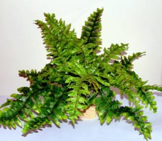 Czy te rośliny są prawdziwe, czy sztuczne? Odróżnisz? QUIZ