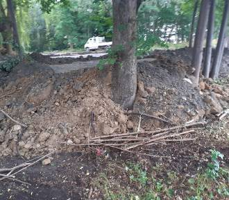 Firma wydzierżawiła działki pod parking i zniszczyła rosnące tam drzewa
