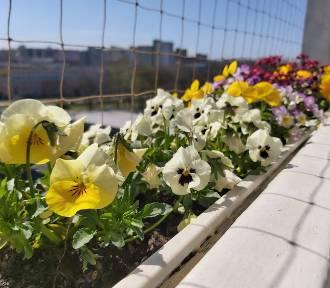 Stwórz balkonową łąkę przyjazną pszczołom