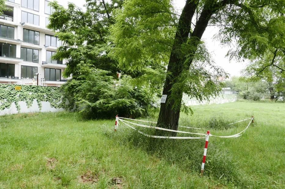 Warszawa. Ruszyła wycinka drzew w parku Skaryszewskim na zabytkowym terenie