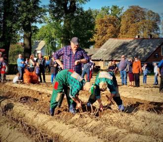 Dzień Ziemniaka 2021 i wykopki jak za dawnych lat w Celbowie