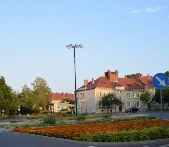 Będzie kolorowo w Chełmie podczas tej jesieni, a jeszcze bardziej na  wiosnę