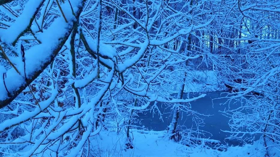 Zima w lasku zachodnim w Słupsku