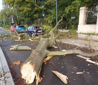 Drzewo runęło na samochód w centrum Łodzi ZDJĘCIA