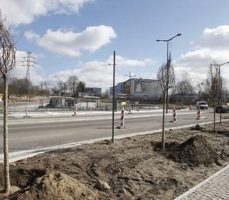 Nowe drzewa w Łodzi. Sprawdź, czy będą przy twojej ulicy