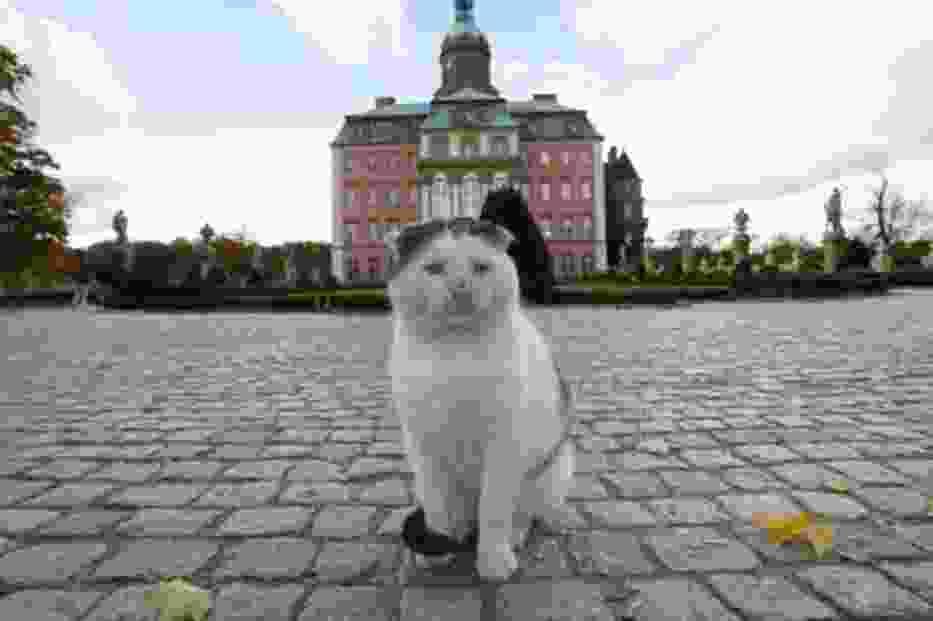W Wałbrzychu znany jest kot Bolko, który tępił gryzonie w zamku Książ