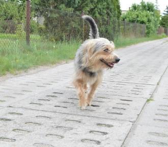 O psie z Rytla, który uratował swojego pana (zdjęcia)
