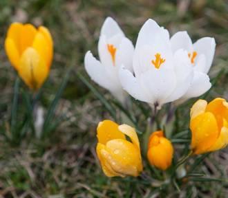 Kiedy przyjdzie wiosna? Mamy długoterminową prognozę pogody
