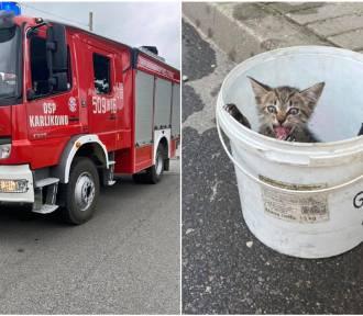 Uratowali kotka, który utknął w studzience kanalizacyjnej. Znaleźli mu też nowy dom