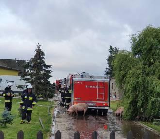 Mieroszyno: pożar w gospodarstwie   ZDJĘCIA, WIDEO