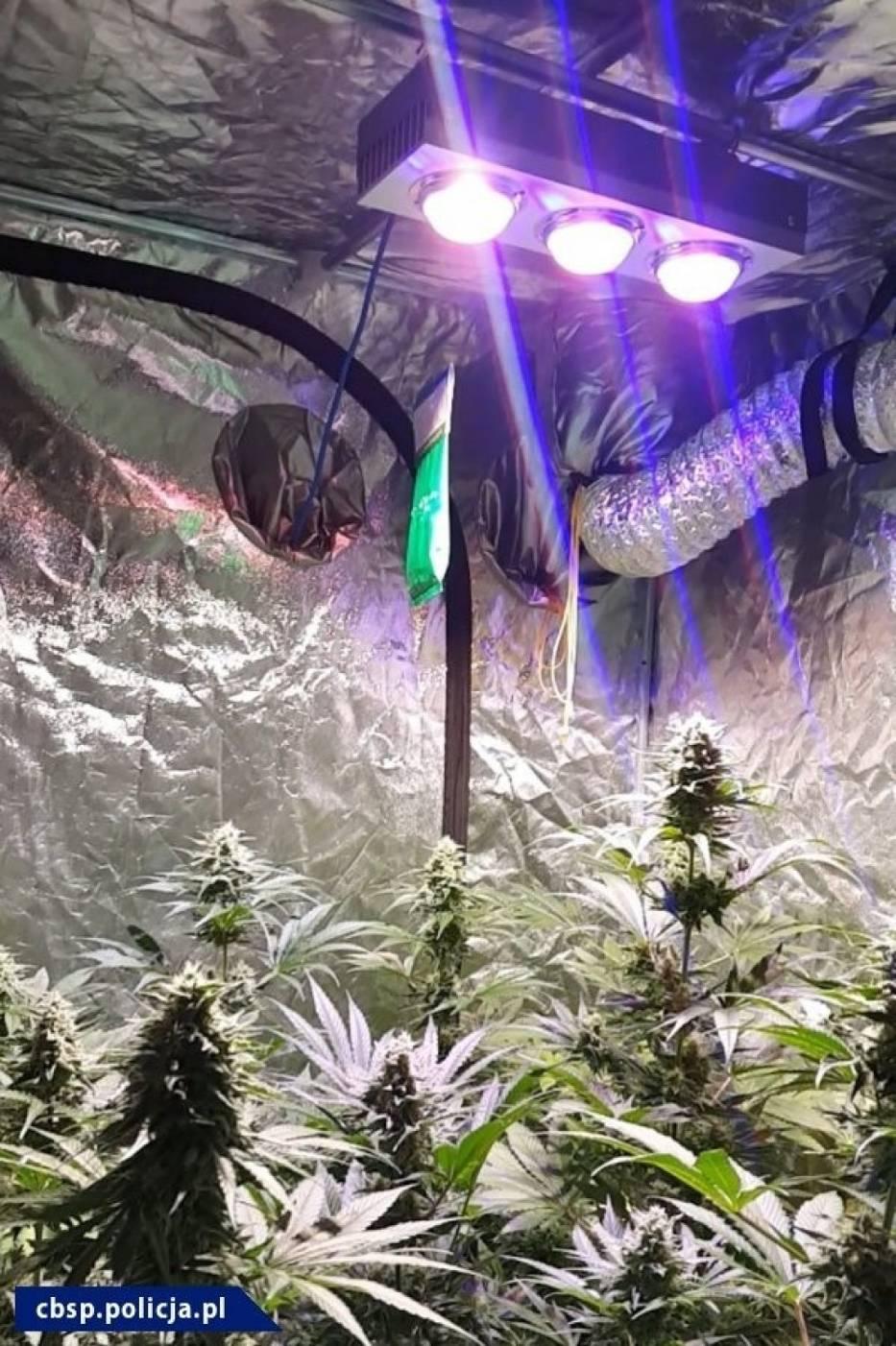 Zlikwidowanie laboratorium narkotyków syntetycznych, dwóch plantacji konopi oraz przejęcie dużych ilości amfetaminy, to efekt tylko ostatnich działań policjantów z opolskiego zarządu Centralnego Biura Śledczego Policji