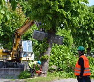 Nowy Dwór Gd. Wycinka drzew. Burmistrz tłumaczy