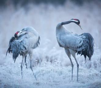 Piękne zdjęcia zwierząt i przyrody znad Odry autorstwa Grzegorza Sawko
