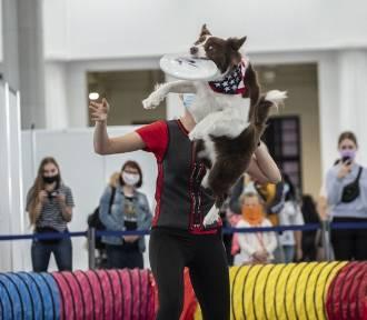 Wielbłądy, lamy i inne zwierzęta przyjechały do Poznania na targi Animal Fest [FOTO]