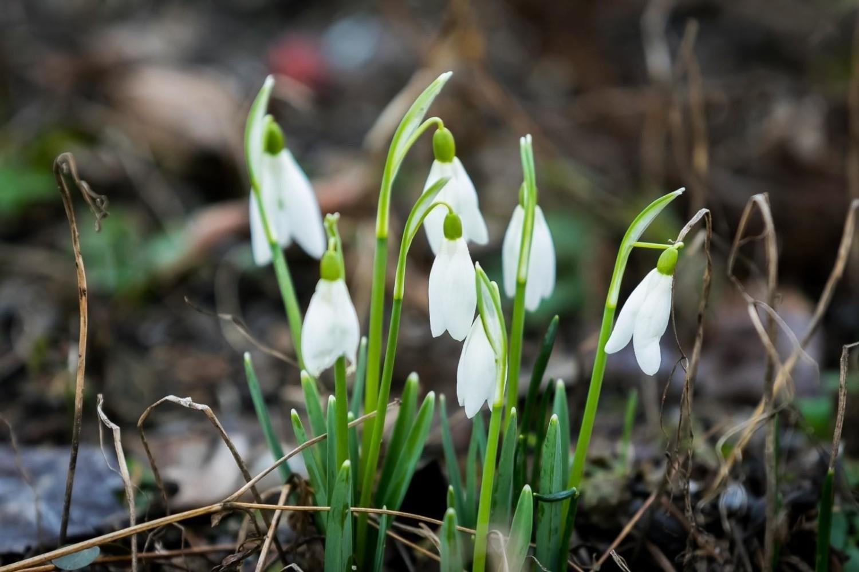 Piękna wiosna zimą. Przyroda budzi się trochę za wcześnie