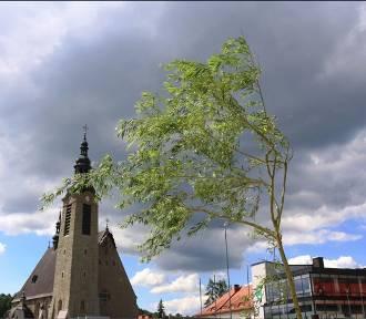 Limanowski rynek z drzewami. Nadal przypomina betonową pustynię?