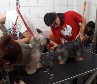 Uczniowie ZSCKR w Zduńskiej Dąbrowie uczyli się strzyc psy [ZDJĘCIA]