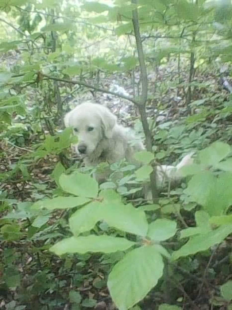 Tego psa kilka dni temu w lesie w okolicy Czerwieńczyc znaleźli pracujący tam  mężczyźni