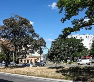 Plac Zgody: Walka o drzewa i spór na ekspertyzy