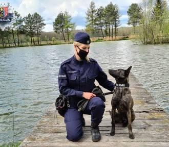 """W szeregi polkowickiej policji wstąpił """"nowy funkcjonariusz"""". To policyjny pies Frida"""