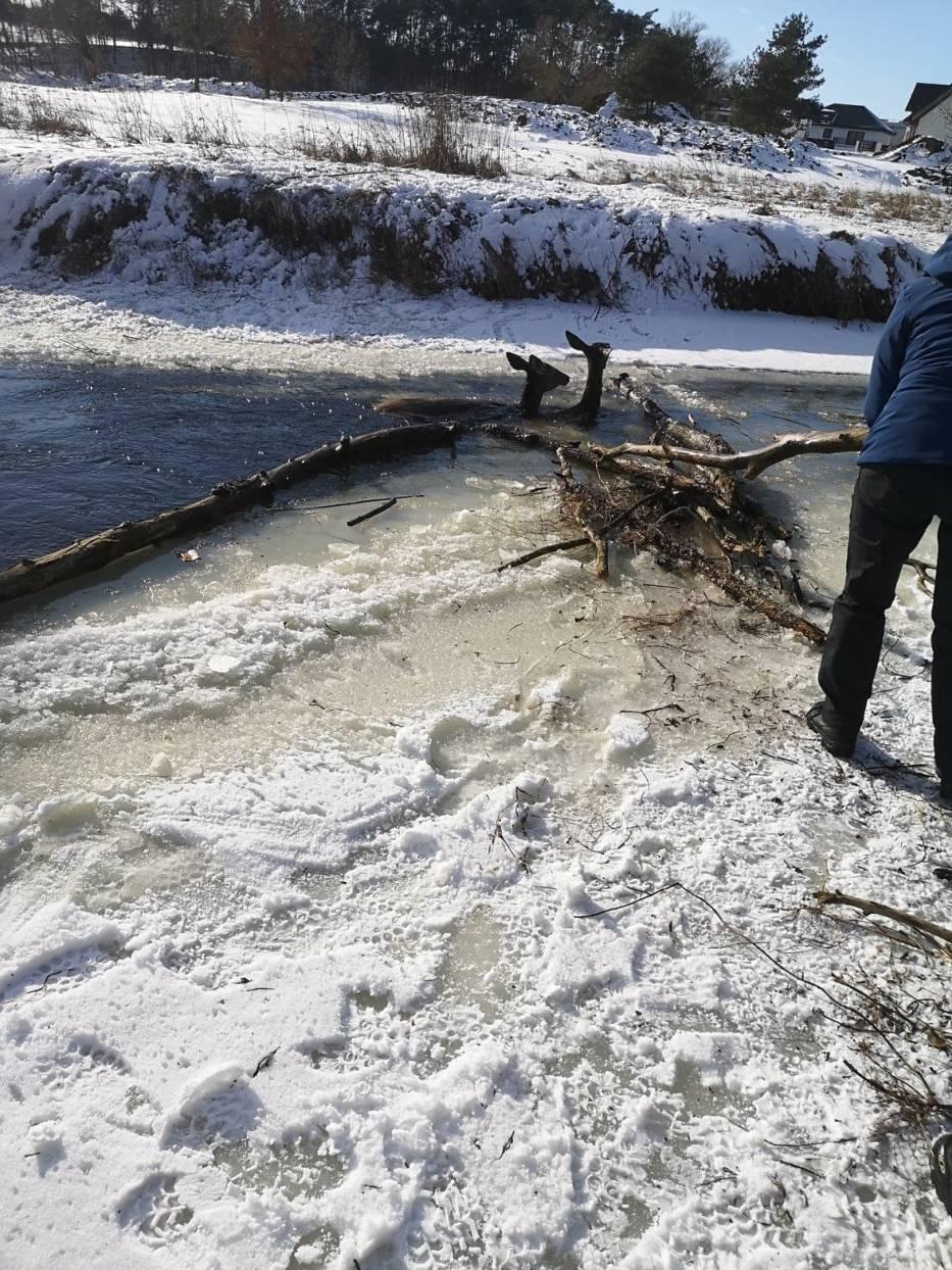Dramatyczna akcja ratunkowa w miejscowości Machnacz w gminie Brześć Kujawski (pow