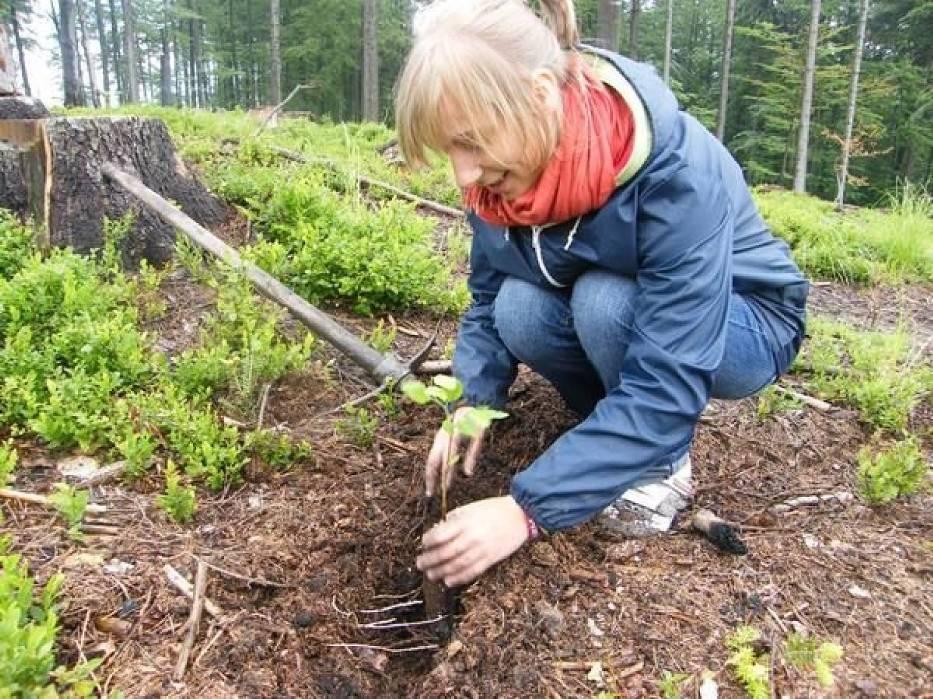 Młodzież z Cieszyna zasadziła w sobotę 1200 drzew