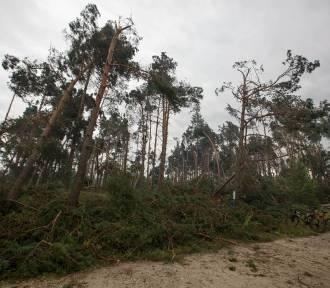 Właściciele lasów uszkodzonych po nawałnicy nie dostaną pieniędzy jeśli nie posprzątają